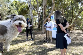 A cheeky Koukla watches on as Environment Minister Lily D'Ambrosio announces 18 new parks.