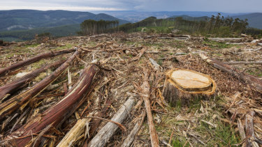 March 2018: Clearfelling in the Royston Range area, about 100 kilometres from Melbourne.