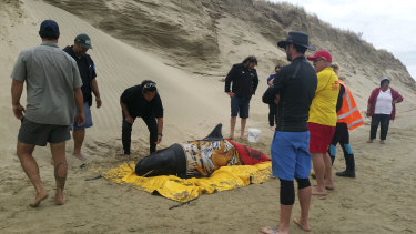 Rescuers stand with one of 10 pigmy killer whales found stranded at Ninety Mile Beach.