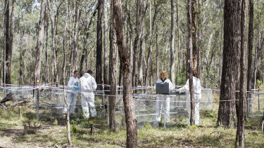 Professor Shari Forbes (second from right) with research students inside Australia's first body farm, called Australian Facility for Taphonomic Experimental Research (AFTER)