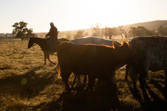 Australia is telling the UK that fears of a flood of Aussie beef into the market are unfounded.