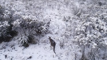 The state's first snowfall arrives at the Tinderry Range, south-east of Canberra.