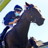 Bargain buy rockets into contention for Inglis Sprint