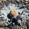 Why I didn't save the animals: Photographer explains shot of roo stuck in mud