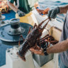 Australia's fishing industry calls crisis talks after rock lobster 'tipping point'