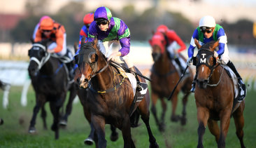 Special Missile returns in the Spring Preview  Handicap at Randwick on Saturday.