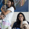 Silver linings: Australia's dogs and cats are living their best lives