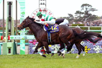Saturnalia wins the Satsuki Sho (Japanese 2000 Guineas) with Christophe Lemaire aboard. Damian Lane will ride the unbeaten colt in next weekend's group 1 Tokyo Yushun (derby)