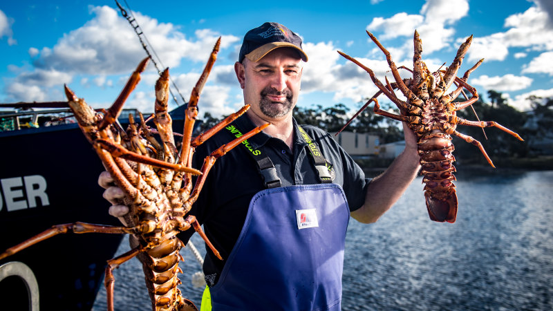 Emergency 'lobster flights' to save $800 million worth of seafood – The Age