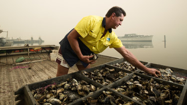 Oyster farmer Bruce Alford, in Mooney Mooney on the Hawkesbury River, takes part in the breeding program.