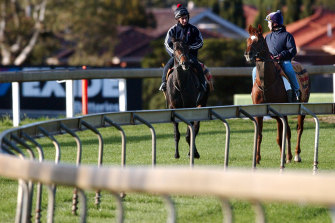 Horses Vinnie Roe (left) and Media Puzzle prepare for the 2002 Melbourne Cup at Sandown