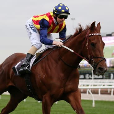 Getting closer: Nature Strip's owners have been contacted by an Everest slot holder