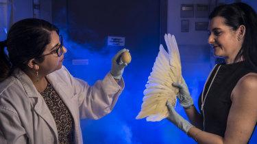 Rebecca Johnson (right) and Greta Frankham from the Australian Museum lead Australia's only wildlife forensics lab.
