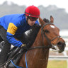 Everest, Cox Plate contenders continue climb