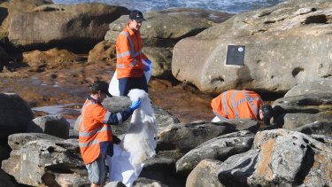 Council workers and SES collect debris near Gordons Bay.
