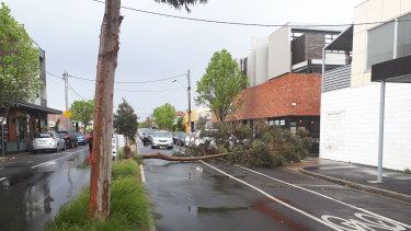 A tree has fallen down in Victoria Street, Seddon, blocking traffic on the busy shopping strip.