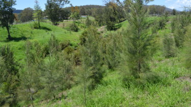 Laidley Creek was restructured and re-planted with deep-rooted eucalypts, wattles and casuarinas.