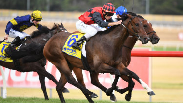 There are eight races on the card at Grafton on Monday.