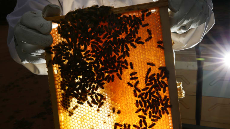 The Australian horticulture industry wants a vibrant beekeeping industry.