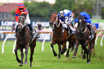Verry Elleegant is the pick of Chris Waller's five hopes in the Queen Elizabeth Stakes.