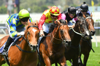 Chameleon Choice, in the red and yellow colours,  is one of four horses with race experience in an intriguing  two-year-old feature at Randwick.