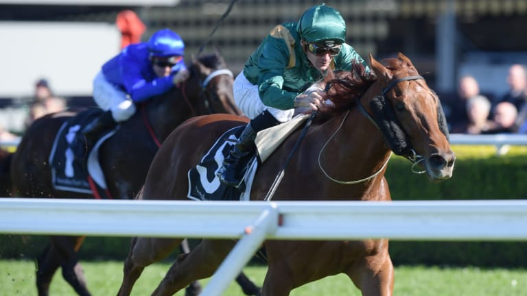 Triple treat: Corey Brown gets Heluka home at Randwick on Saturday, the first of three winners on the card.