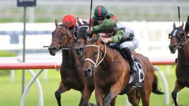 Shared Ambition is Chris Waller's pick of his eight Doncaster runners.