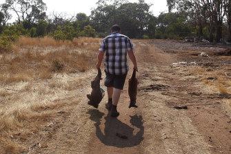 A dead kangaroo and koala are carried to a mass grave on Kangaroo Island on January 8.