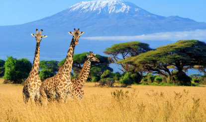 Nations move to protect giraffes as endangered species