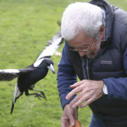 Magpies can target people: Warning after cyclist's death