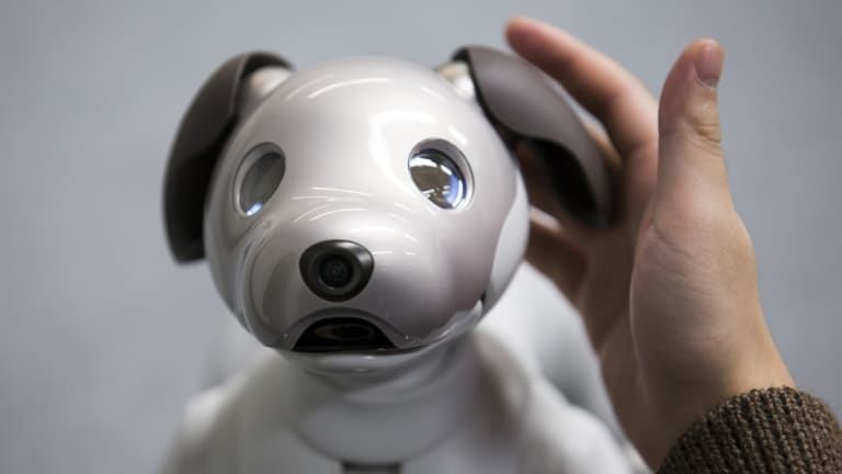 Sony's robotic dog Aibo is about the size of a Yorkshire terrier.