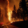 Carbon offset forests burn in US fires, raising doubts over climate credits