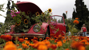 Potted sunflowers push out of the bonnet of an old Volkswagen Beetle surrounded by flowers in central Syntagma Square, Athens, in 2013.