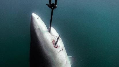 'Human life must be prioritised': Premier bites back over shark culls