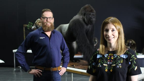Monkey magic on show at Queensland Museum