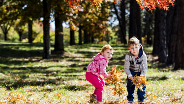 There are many reasons to love Canberra in Autumn. Who doesn't love playing in the leaves?