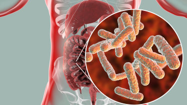 Researchers have catalogued the genetic information of over 5000 gut bugs, the vast majority of which have never been studied in a lab.