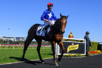 The group 1 prestige may have to wait but Rubisaki will chase big money with a Golden Eagle campaign in the spring.