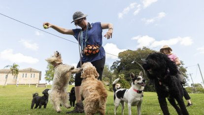 'The outcome I would like to see': Minister wants off-leash dog walking in Callan Park