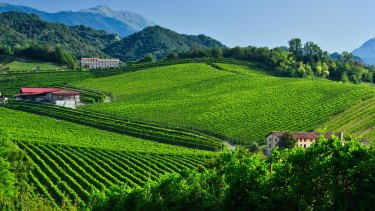 Vineyards on the rolling hills of Conegliano, which was added to the UNESCO list.