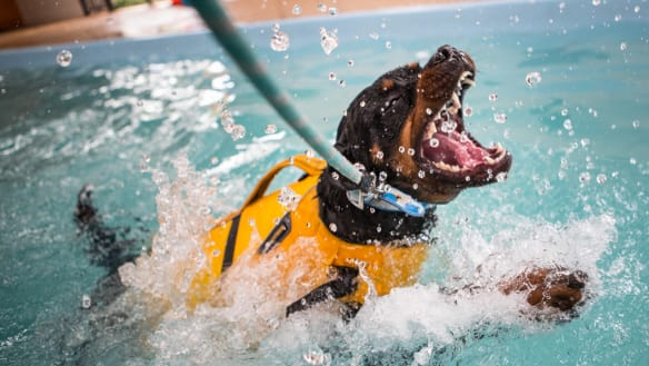 Dogs-only pools are making a splash in the suburbs
