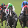 Mountain of joy for duo after victory in Carrington Stakes at Randwick