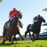 Redzel and Pierata to recommence battle
