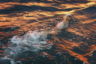 McCardel in action during her attempt to swim across the English Channel last week.