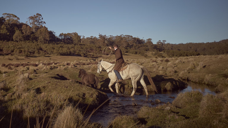 The Imminent Brumby Cull In The Australian Alps