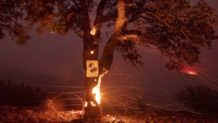 A tree burns from the inside during the Ranch fire in Clearlake Oaks.