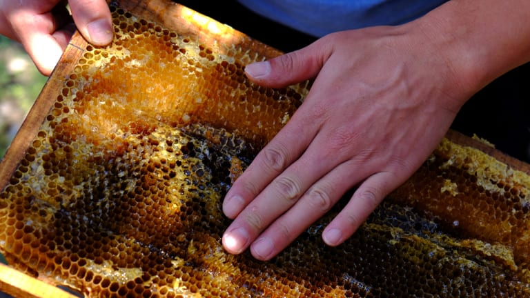 The ACCC has found there is no reliable way to test the purity of honey.