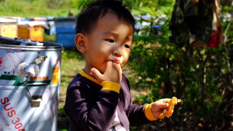 Li Xuanyu,3, licks fresh honey off his fingers at the family's honey farm in northern China. Xuanyu is the grandson of Li Chengfan.