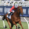 Mornington Cup not a second class ticket to Caulfield Cup say MRC