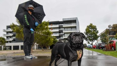 Professional dog walker Harry Trinh has been walking Vernon the pug-jack russell cross three times a day while Vernon's owner, Nicola Clement, is quarantined in Maribyrnong's Ariele building.